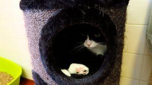 Zaanse dierenasiel, foto Sarah Vermoolen